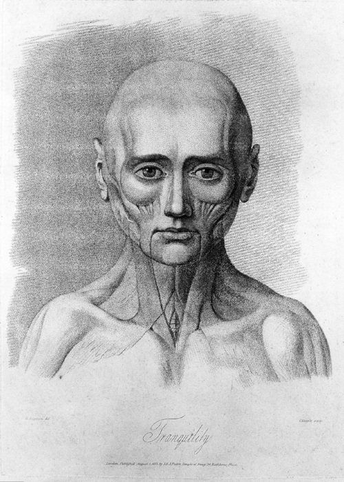 Sketch showing facial muscles in a relaxed state.  Attribution: [CC BY 4.0 (https://creativecommons.org/licenses/by/4.0)], via Wikimedia Commons