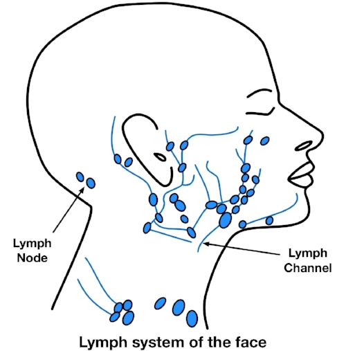 Fig4LymphNodes3.jpg