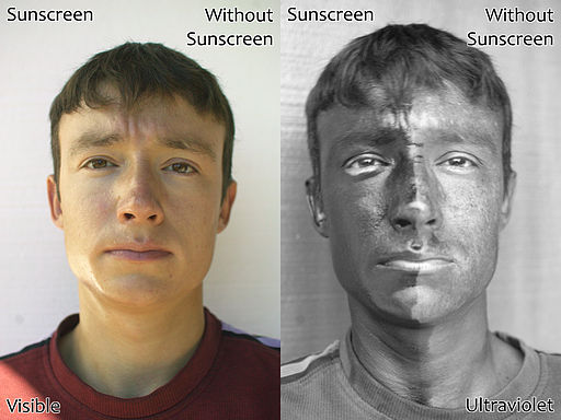 Two photographs of a man wearing sunscreen (spf 50) on one half of his face, in visible light  (left)  and ultraviolet light (UV-A, 340-355nm)  (right) . The sunscreen on the right side (your left) of his face absorbs ultraviolet, making that side appear darker in the UV picture. By Spigget [CC BY-SA 3.0 (https://creativecommons.org/licenses/by-sa/3.0)]