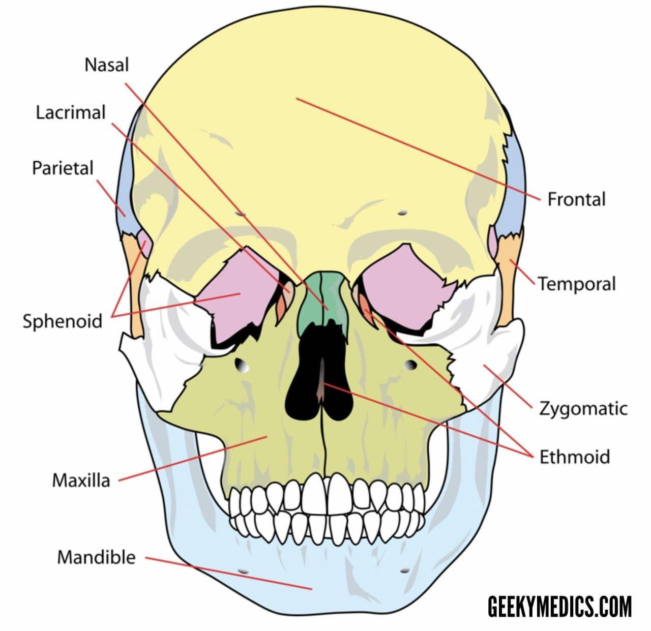 Skull bones (anterior), https://geekymedics.com/bones-of-the-skull/