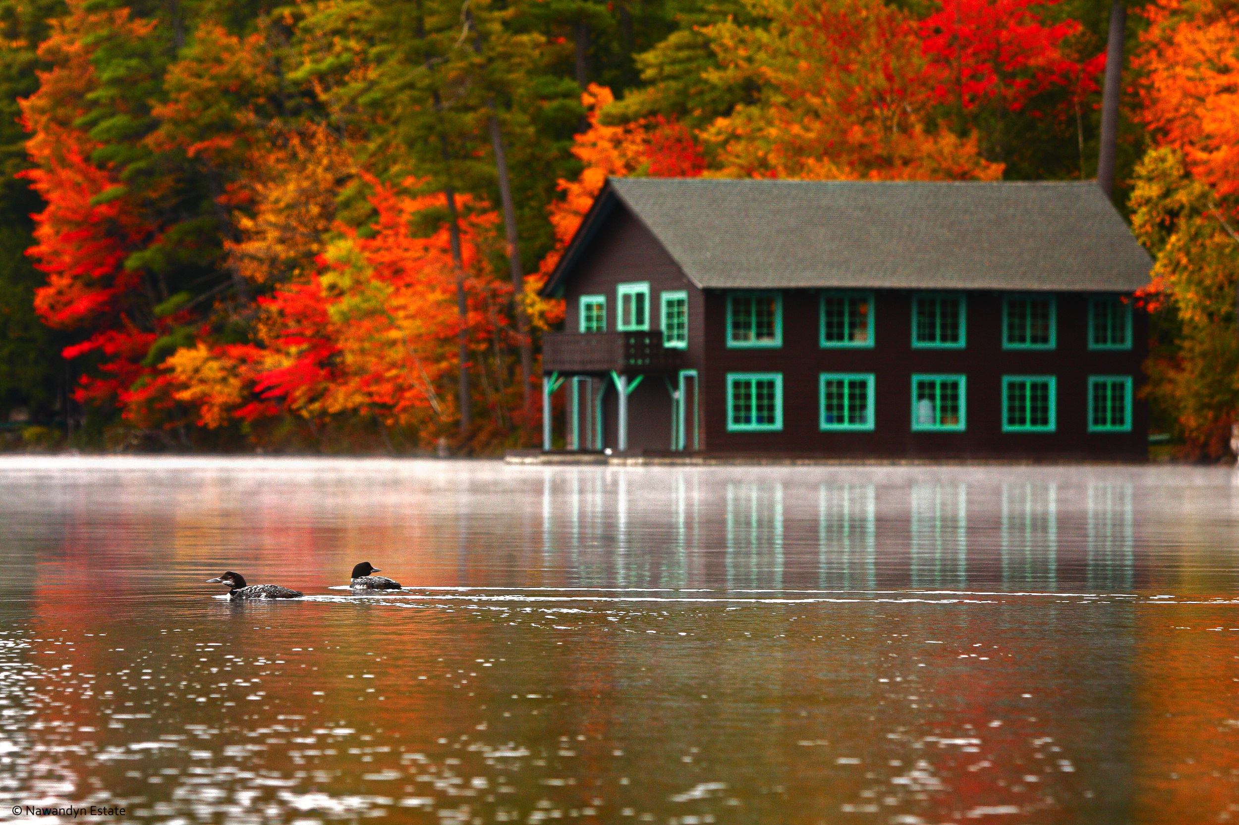 Loons Near Nawandyn's Boathouse on a Fall Morning