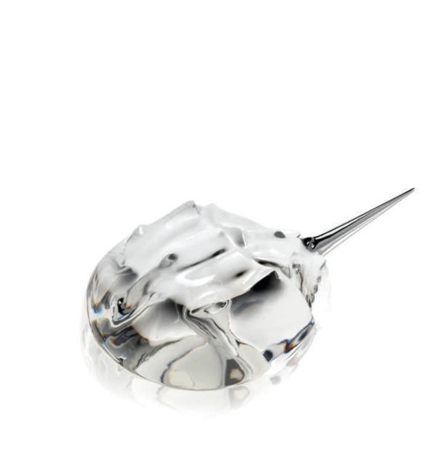 Horseshoe Crab (1).jpg