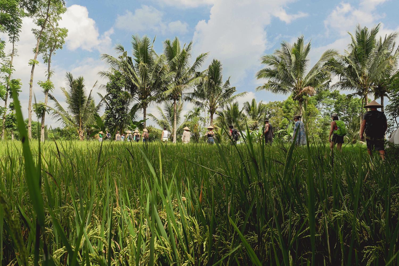 bali-yoga-retreat-retreats-lombok.jpg