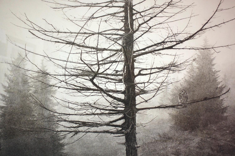 Ghosts/Blue Ridge Pkwy