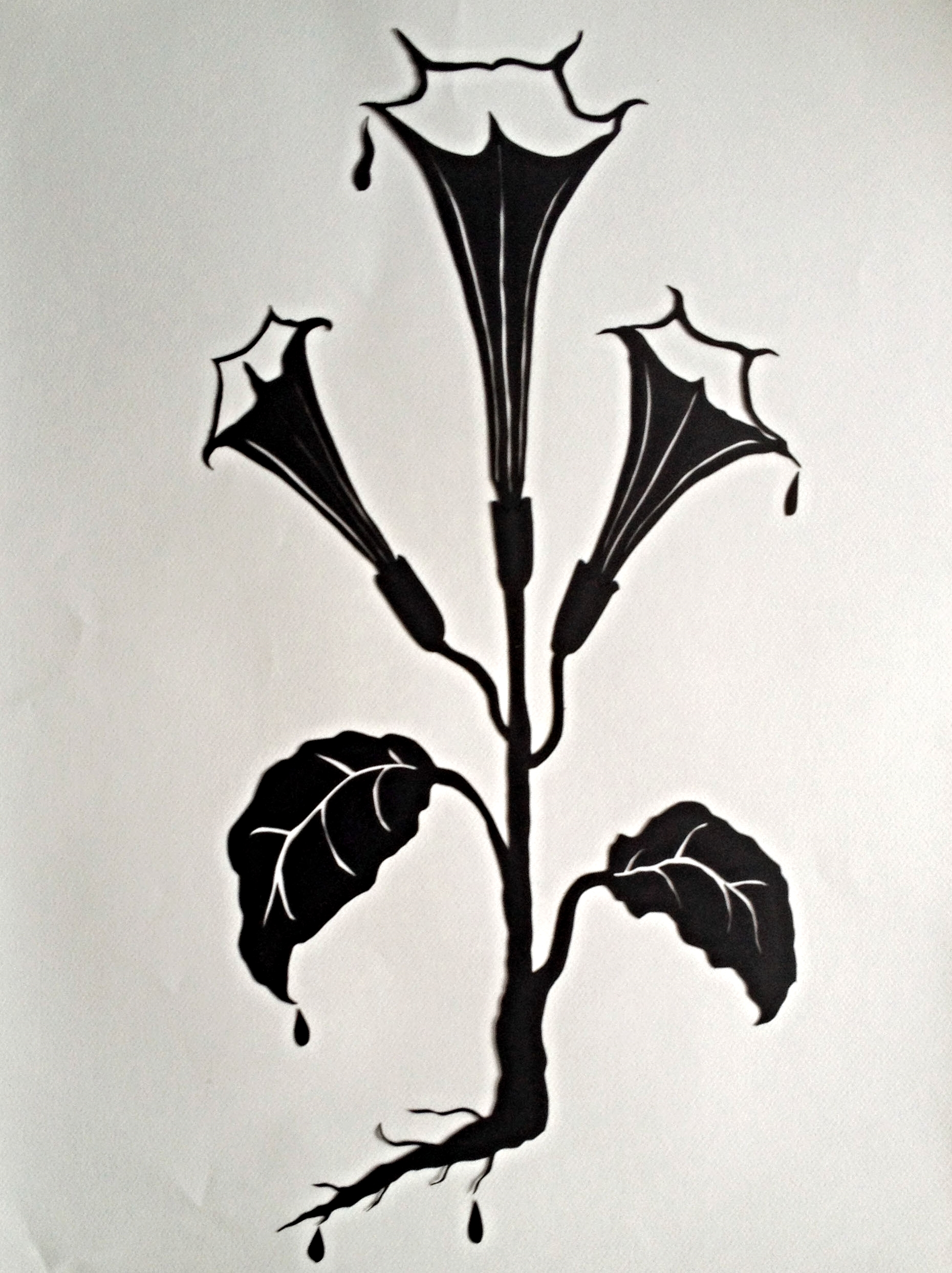 Datura (Devil's Trumpet)