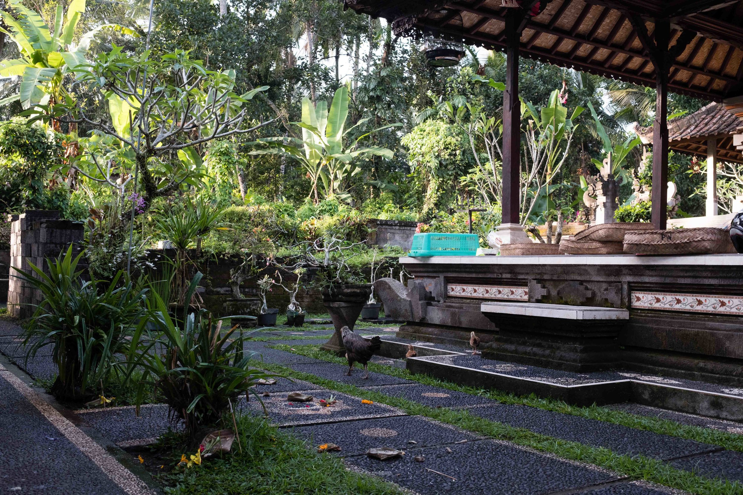 typical Balinese yard - Balinese homes are like compounds with a family temple in the NW corner and other buildings for entertaining, sleeping and cooking are at specific places
