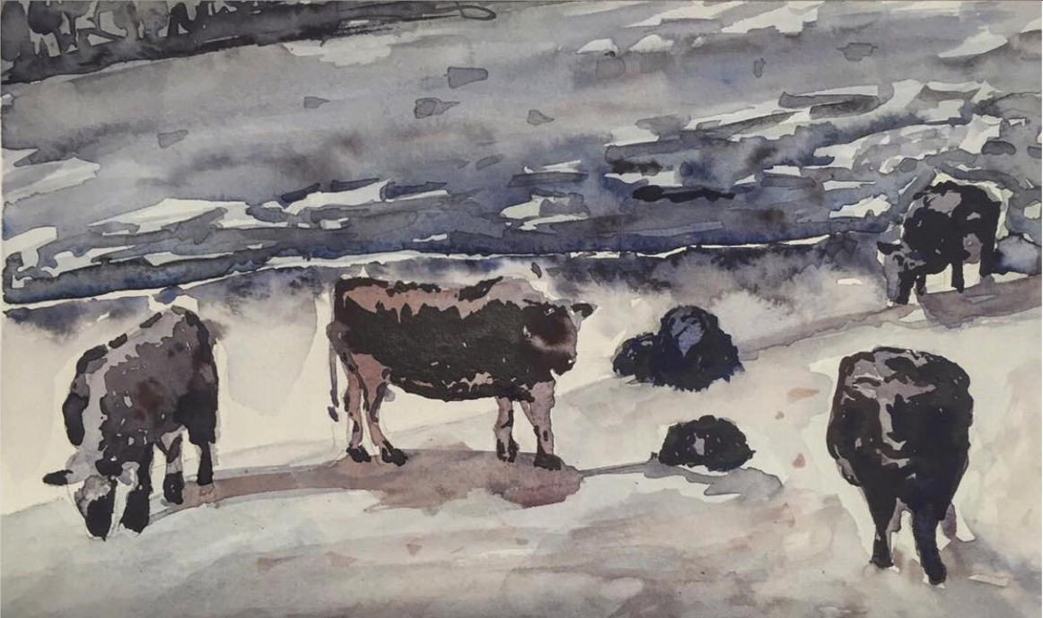 Cows.  Watercolor.