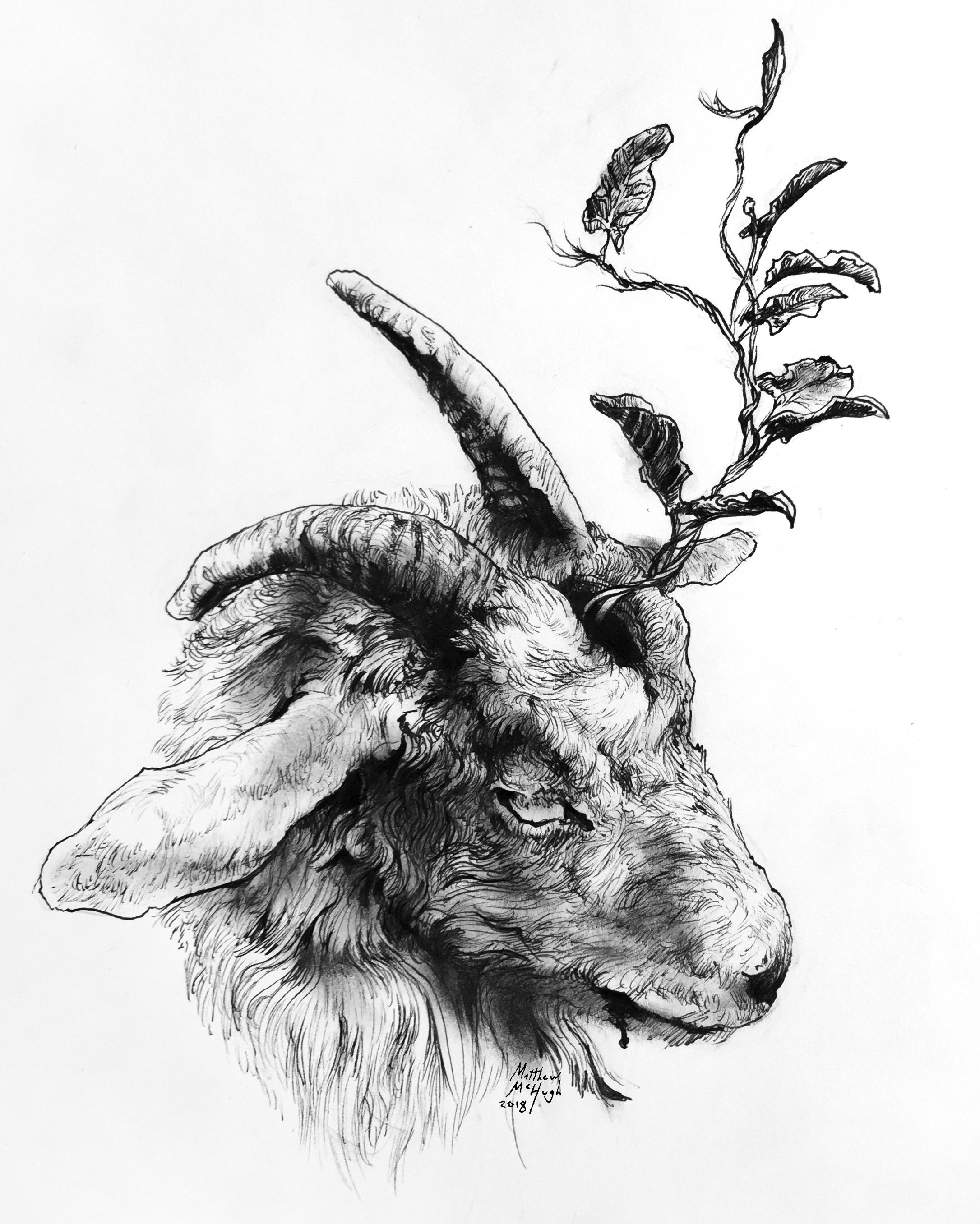 goat vine.JPG