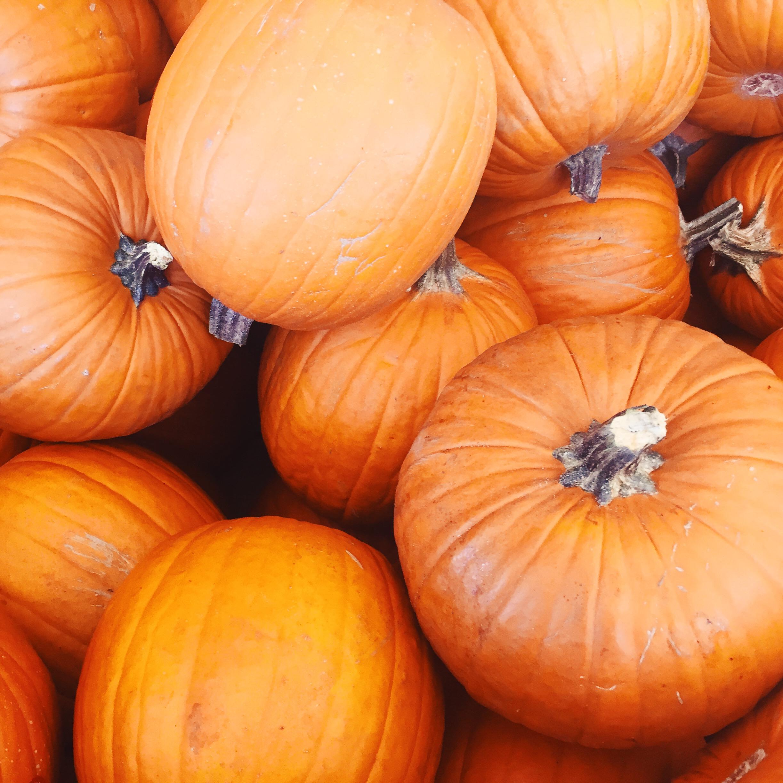 Pumpkin  bread , pumpkin  soup , pumpkin  pie , pumpkin  bars pumpkin stuffing (recipe coming soon), pumpkin  waffles , pumpkin EVERYTHING!