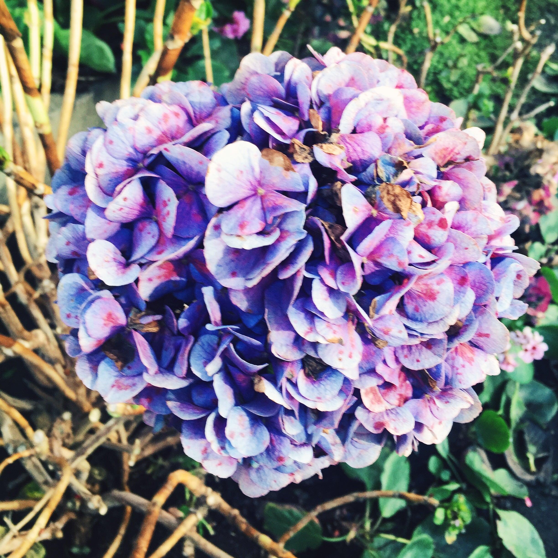 Hydrangea is my favorite flower!