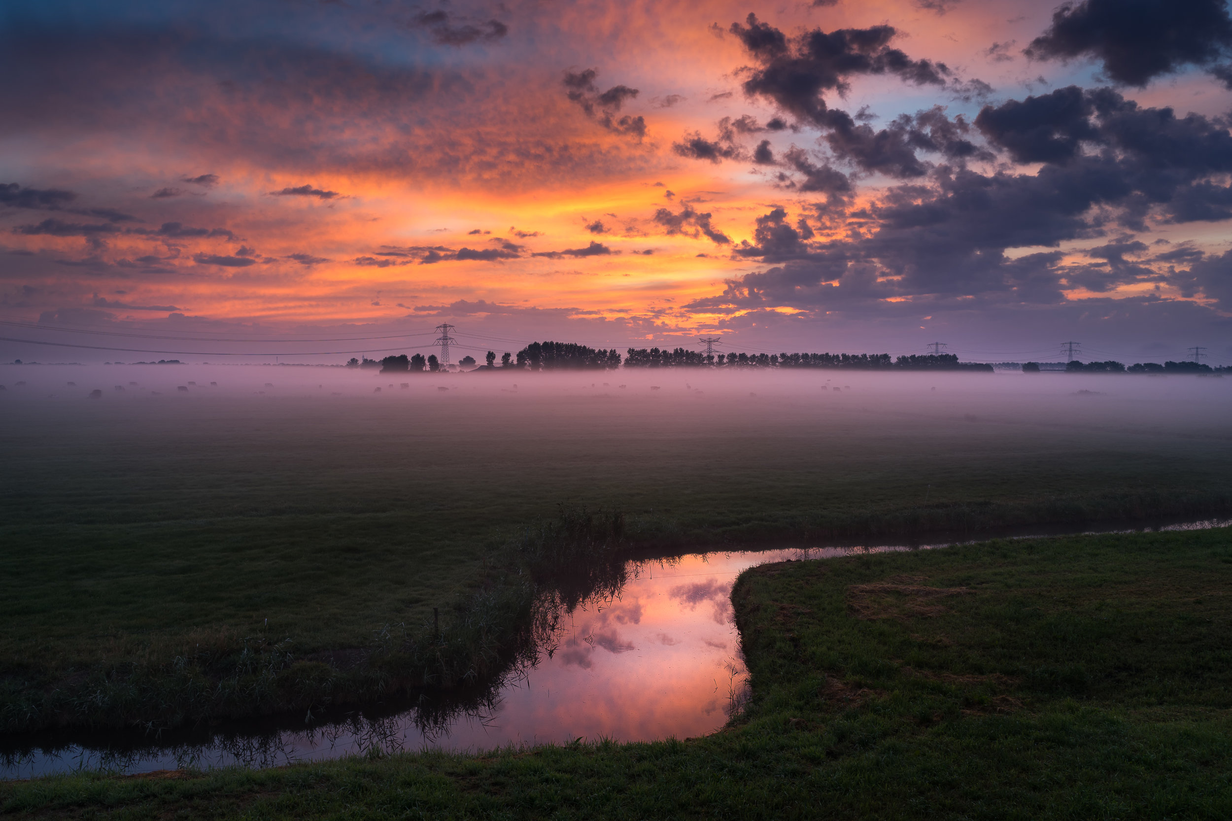 polder website.jpg