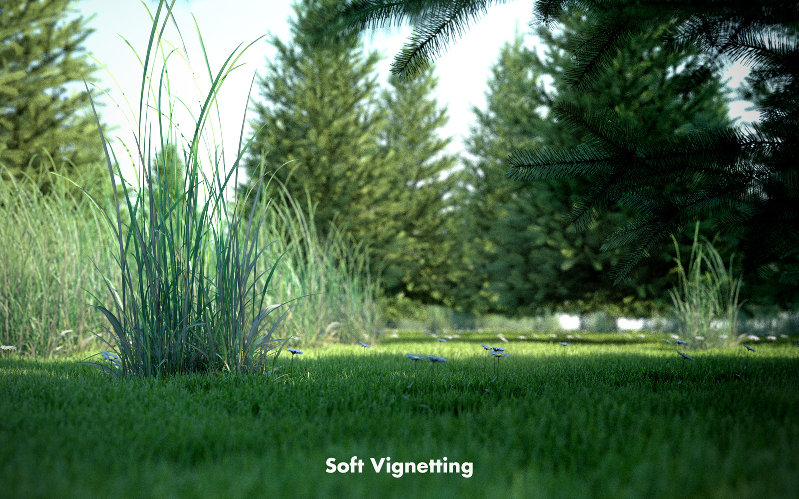 Vignetting Soft.jpg