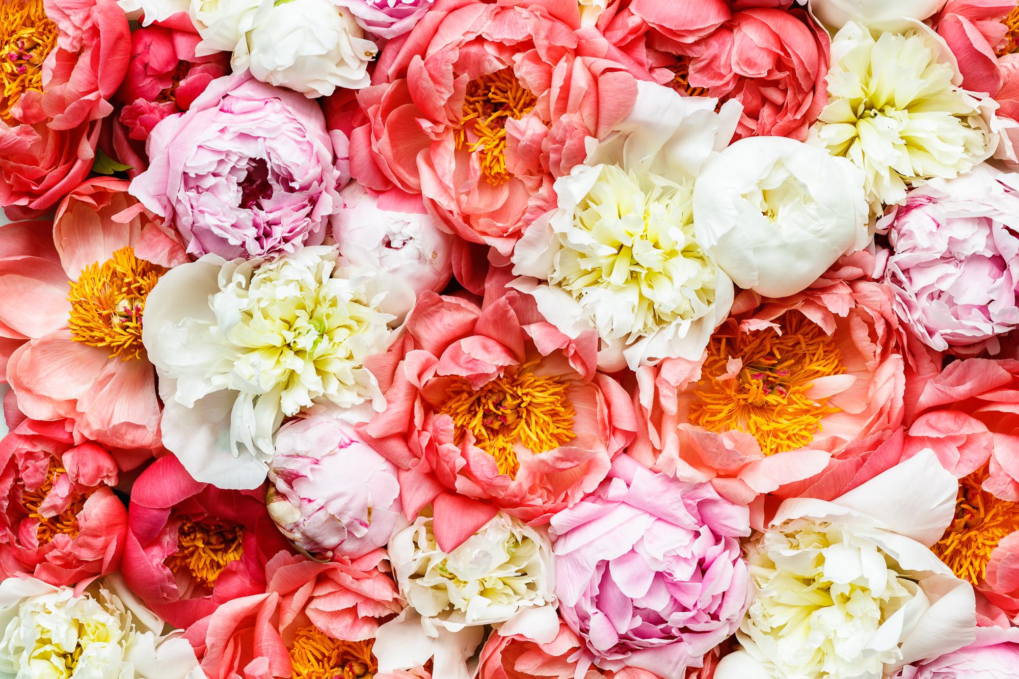 Bloom & Wild April 2017_003 - TG1040_CREDIT_Tom_Griffiths_tomgphoto.co.uk.JPG