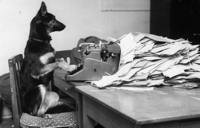 Dog Typing.jpeg