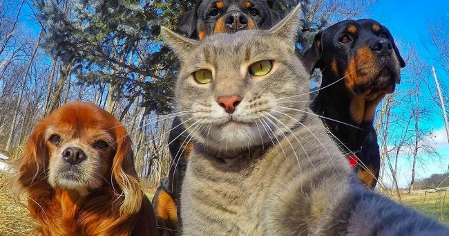Cat Dog Selfie.jpg