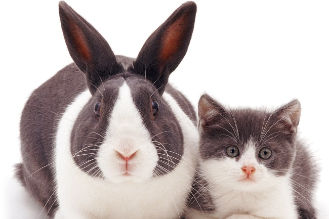 Rabbits are tasty. Cats, not so much…