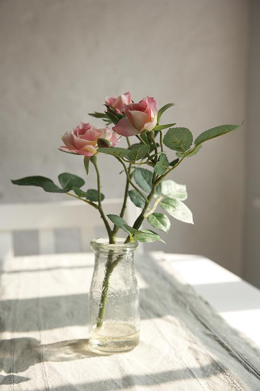 Amity rose.jpg