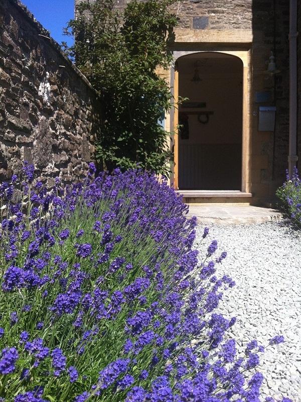 West Wing entrance lavendar.jpg