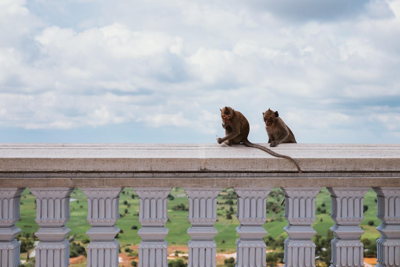 Monkeys probably planning their next attack lol :)