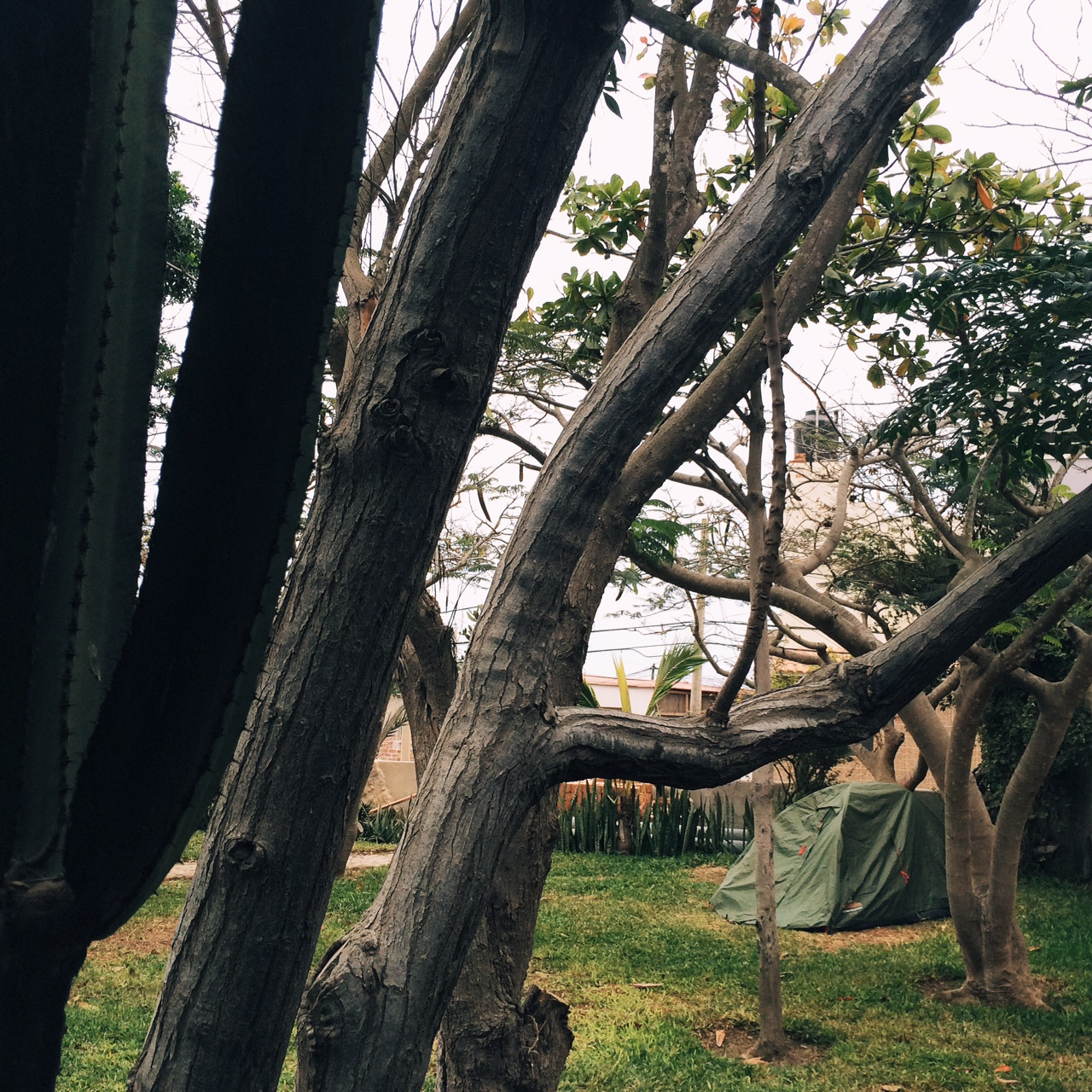 My camping spot here in Huanchaco
