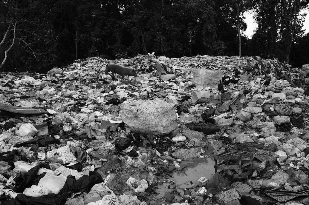A pig wanders through piles of plastic at Itacaré's dumpsite (Bahia, Brazil).