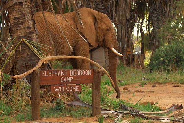 Samburu_EleCamp.jpg