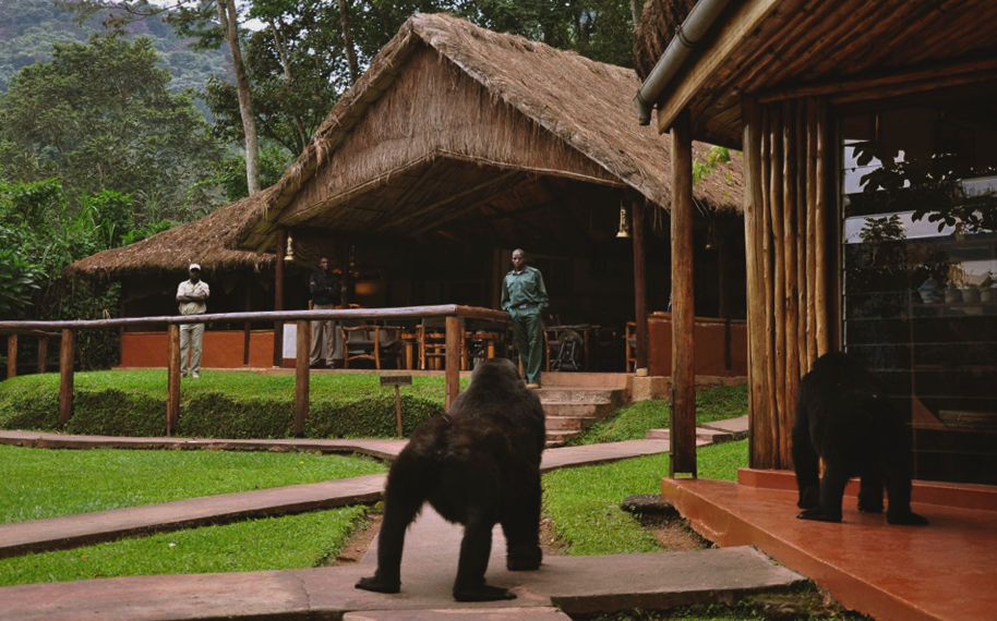Gorilla's at lodge.jpg
