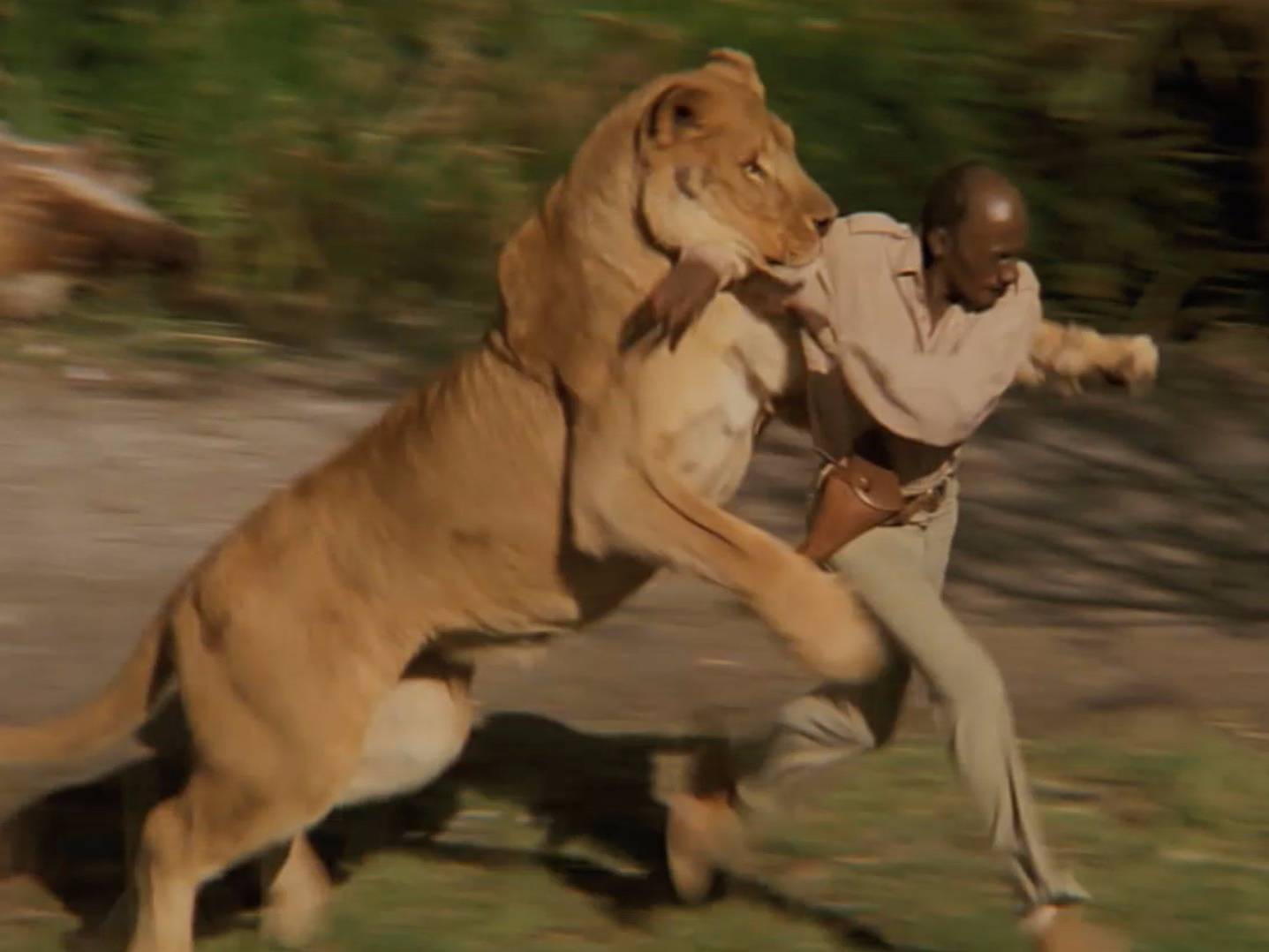 70-people-were-injured-while-filming-this-movie-with-100-untamed-lions.jpg.png