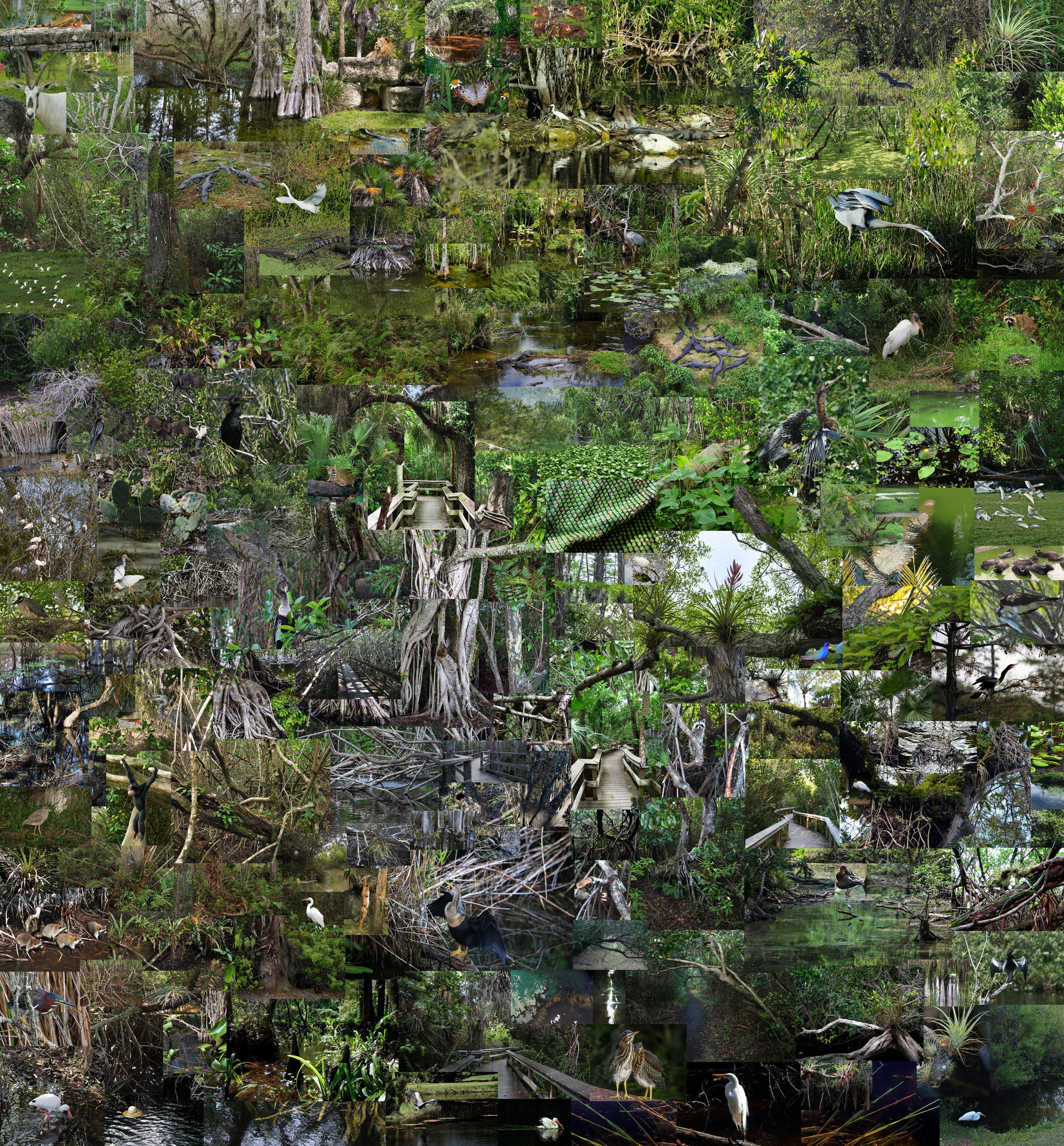 "Everglades  ,  2014, vinyl wallpaper (approx. 200 composited photographs taken in Everglades, Florida), 78""x 84"" (198.1 cm x 213.4 cm)"