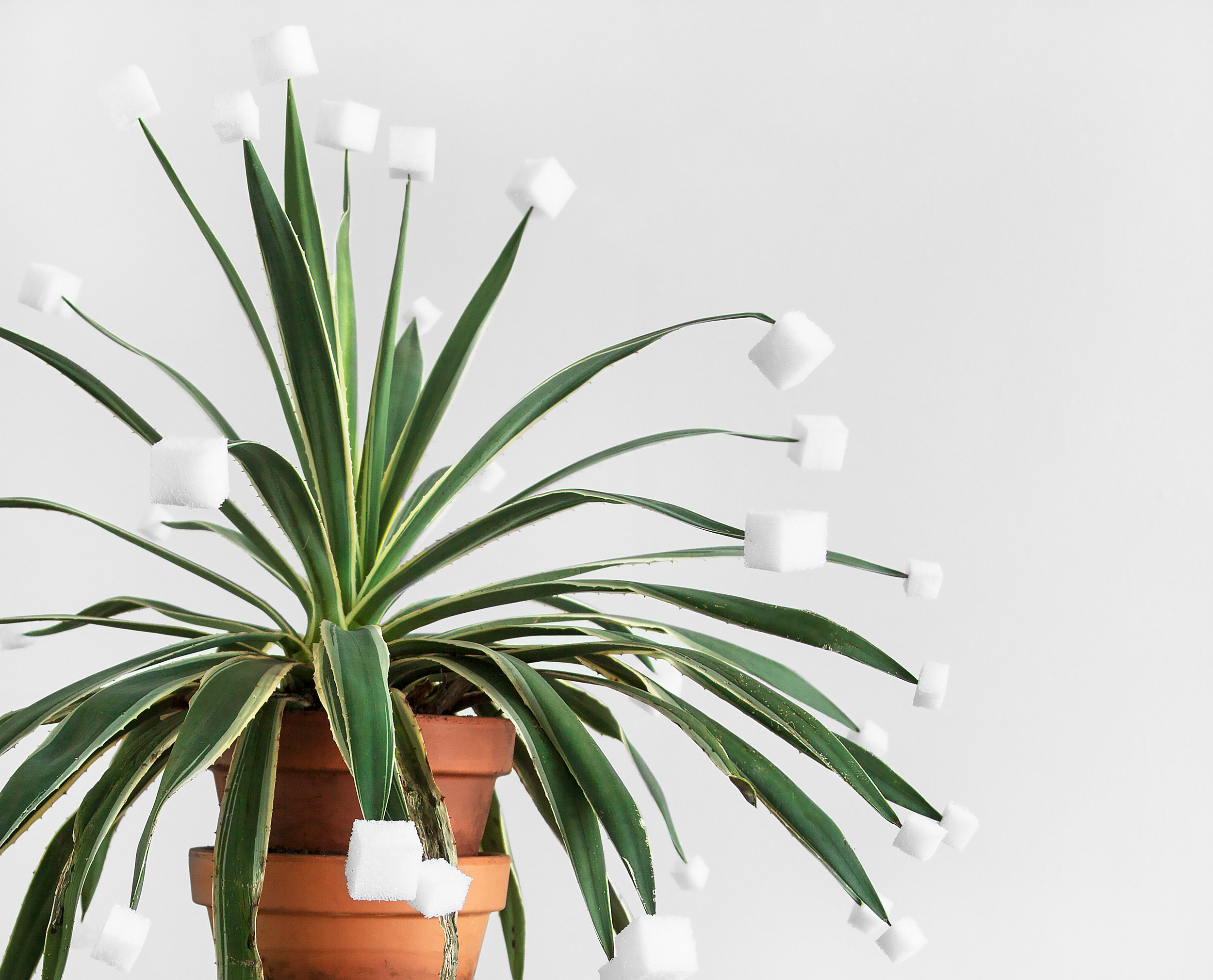 "Cube Tips (for Victoria) , detail, 2014, agave plant, soil, terra cotta pots, styrofoam, approx. 60""x 20""x 14""(152.4 cm x 50.8 cm x 35.6 cm)"