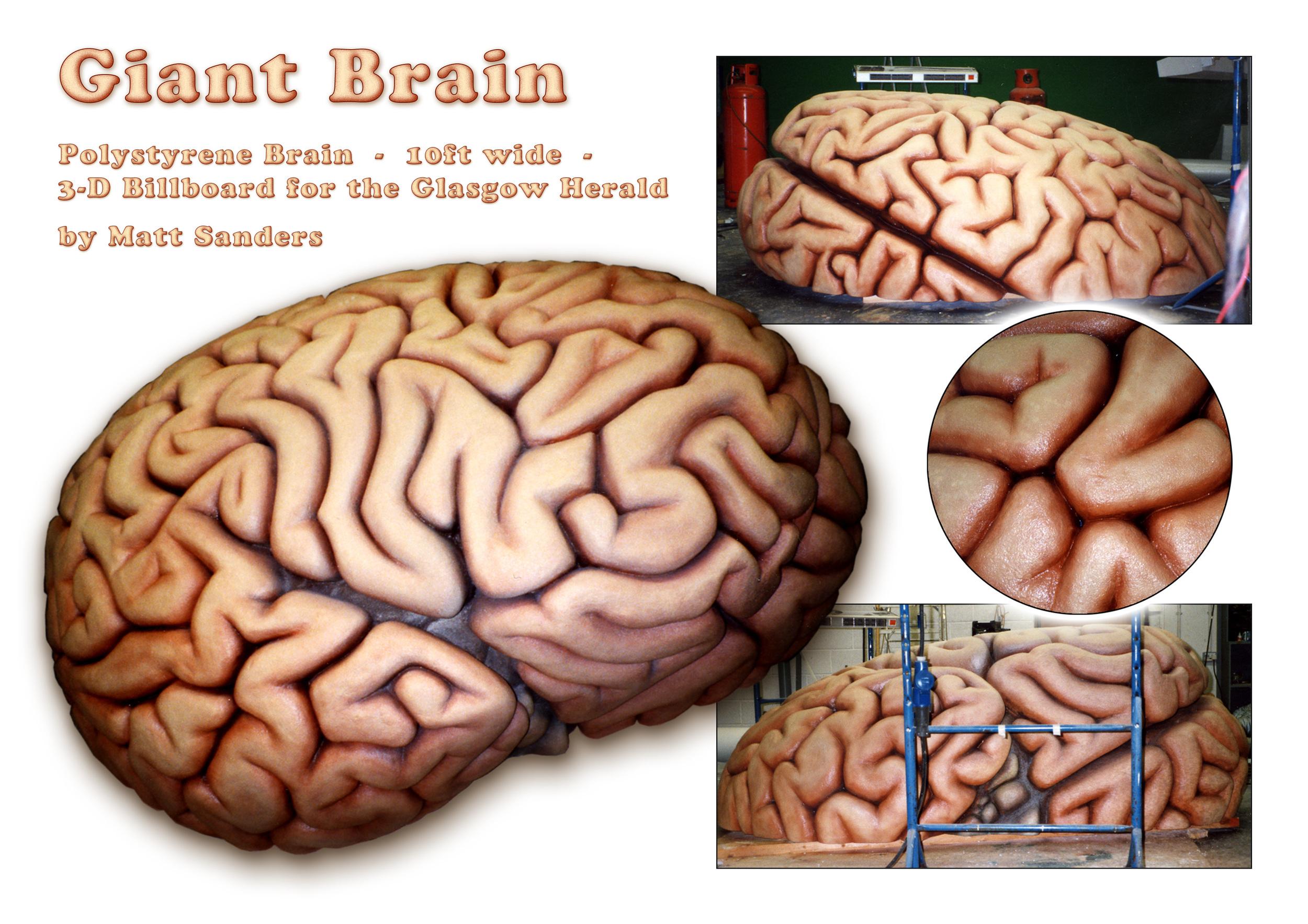 Brain Sheet.jpg