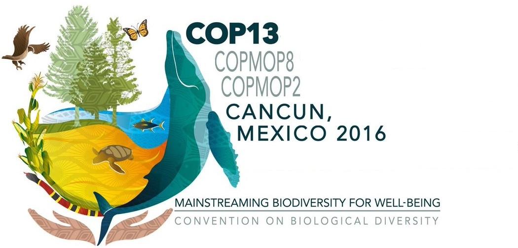 COP13