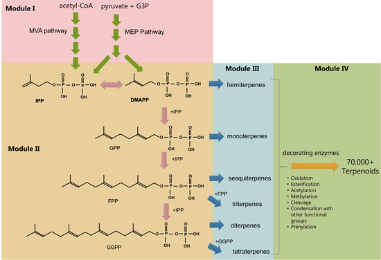 Biosynthesis of terpenoids. The pathways have been conceptually separated into four modules. Image:  Vavitsas et al 2018  (CC BY 4.0)