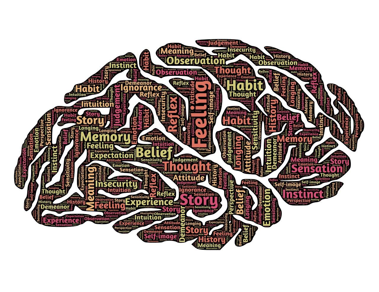 brain-544412_1280.jpg