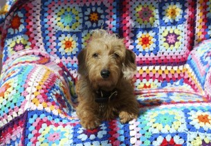 'Mr Pickles' my miniature wire haired Dachsund sat on a brightly coloured crochet blanket
