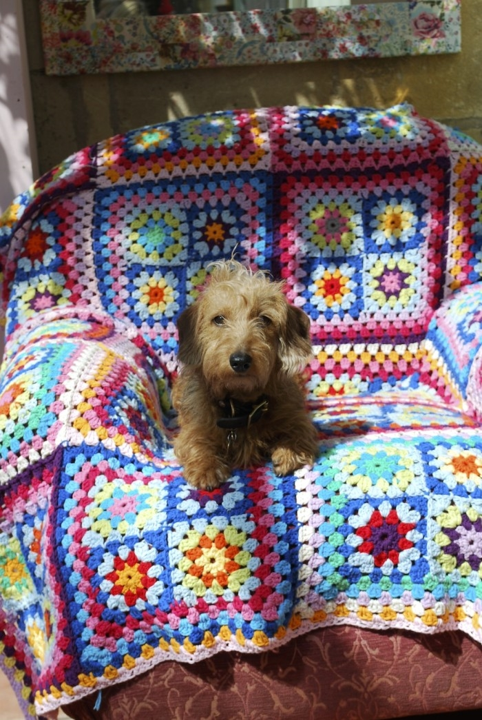 Small dog on a crochet blanket