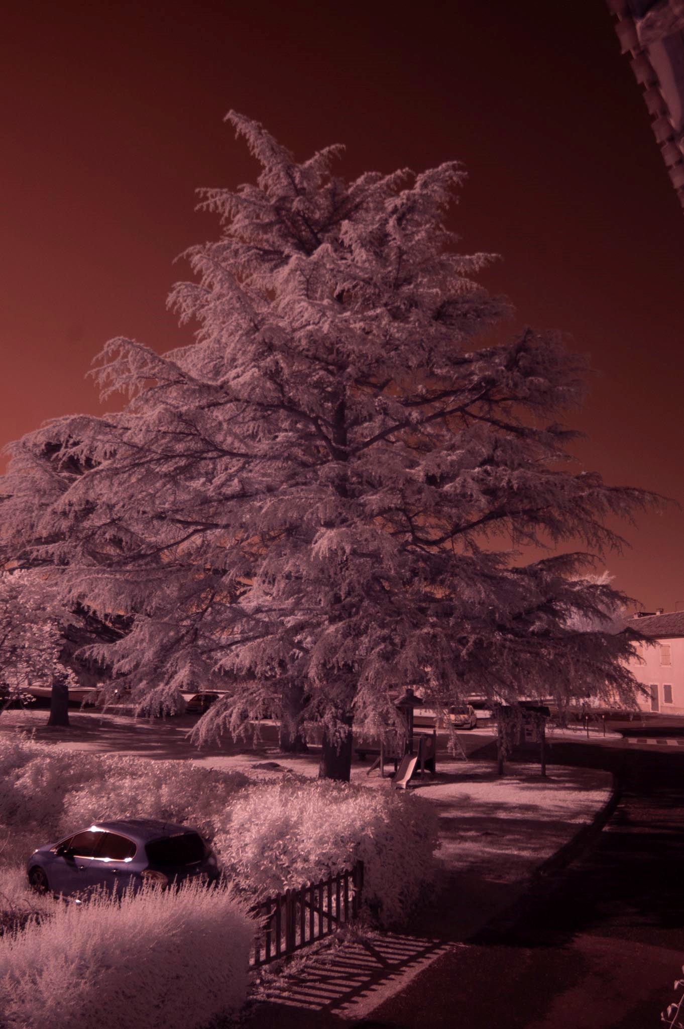 IR image as shot with converted D100.