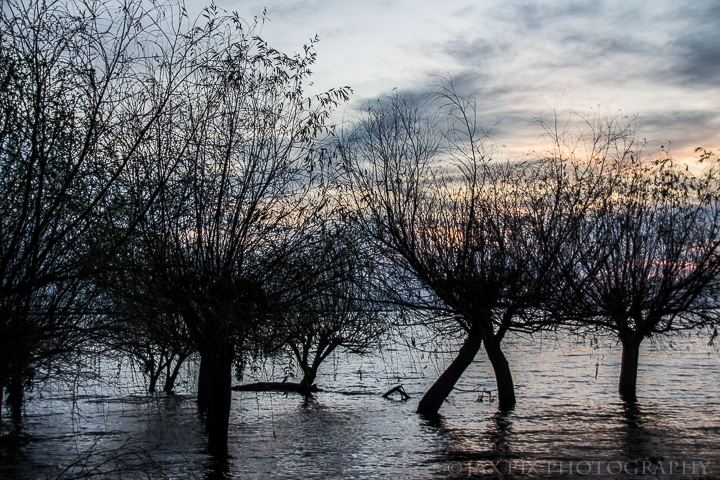 Uruguya Lake trees.jpg