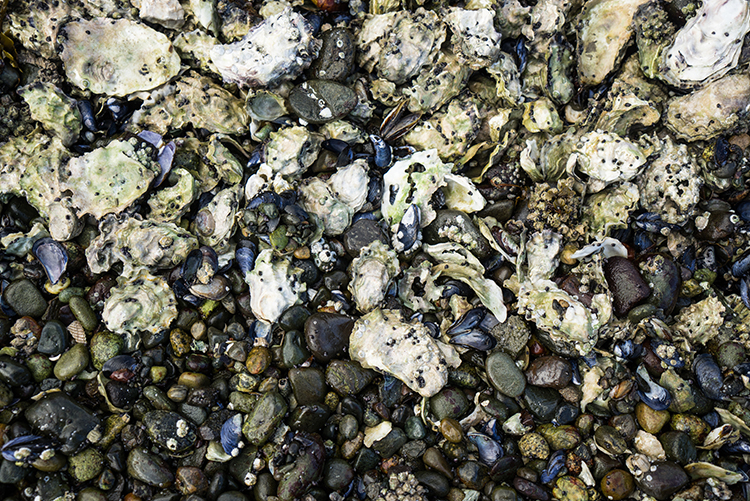 hood-canal-itinerary-shellfish-harvesting-shelton-wa.jpg