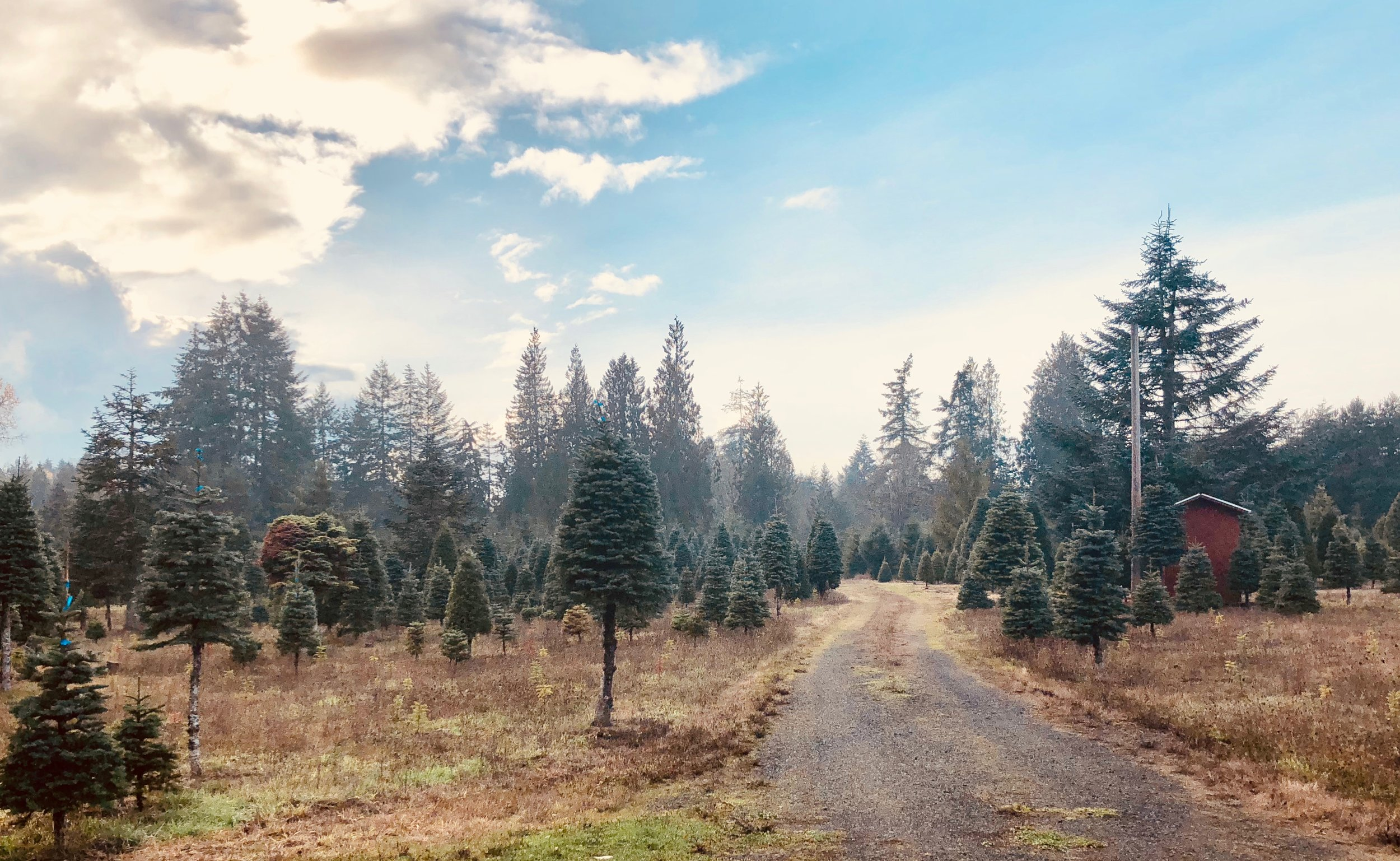 Forester Firs, Arcadia Road