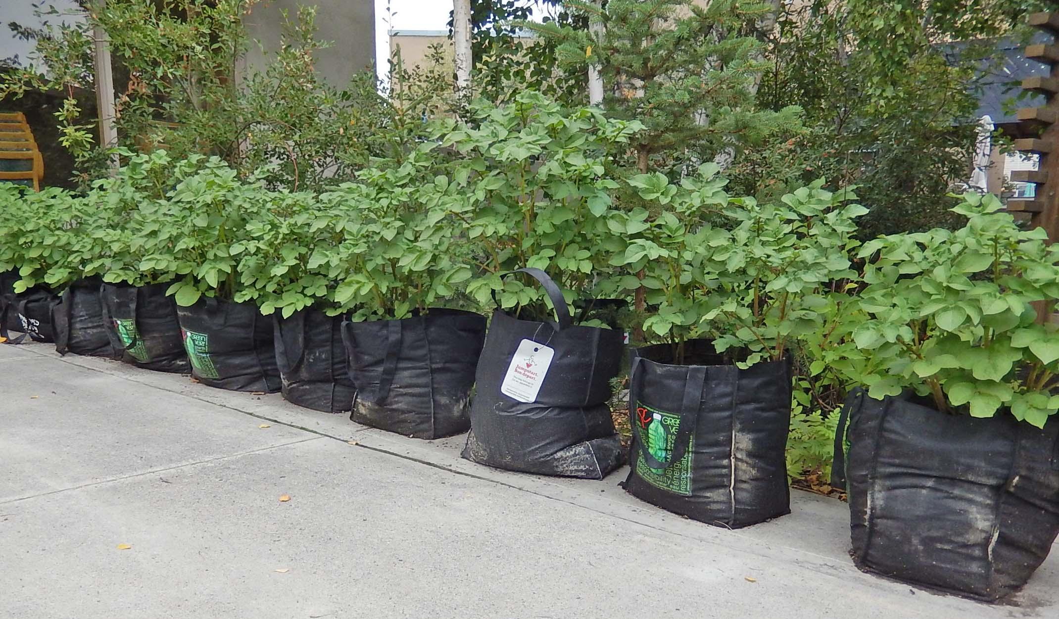 bags of potatoes.jpg