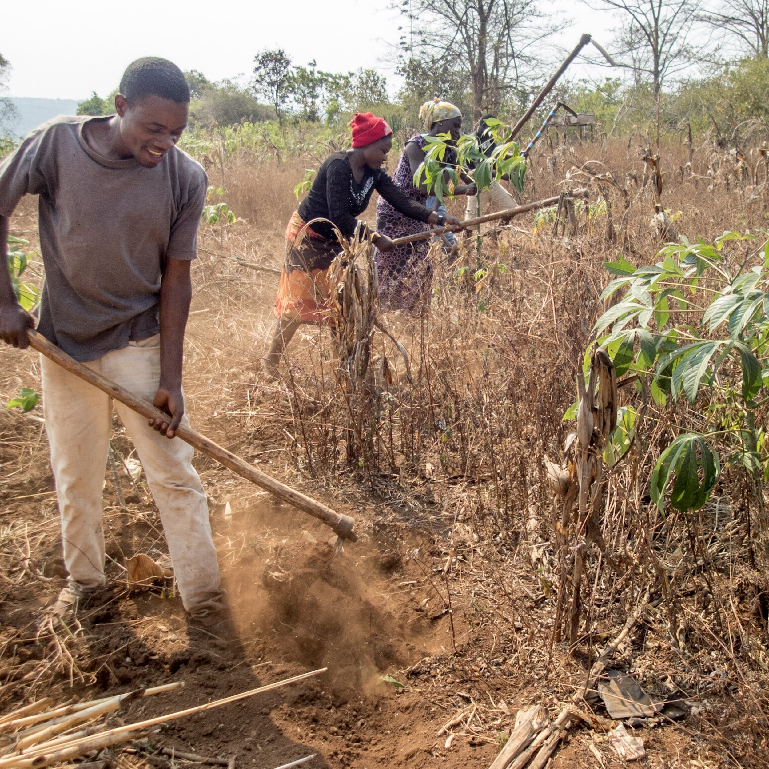 Several of our youths clearing and preparing a field. It's hard manual labor without modern farm equipment that we take for granted.