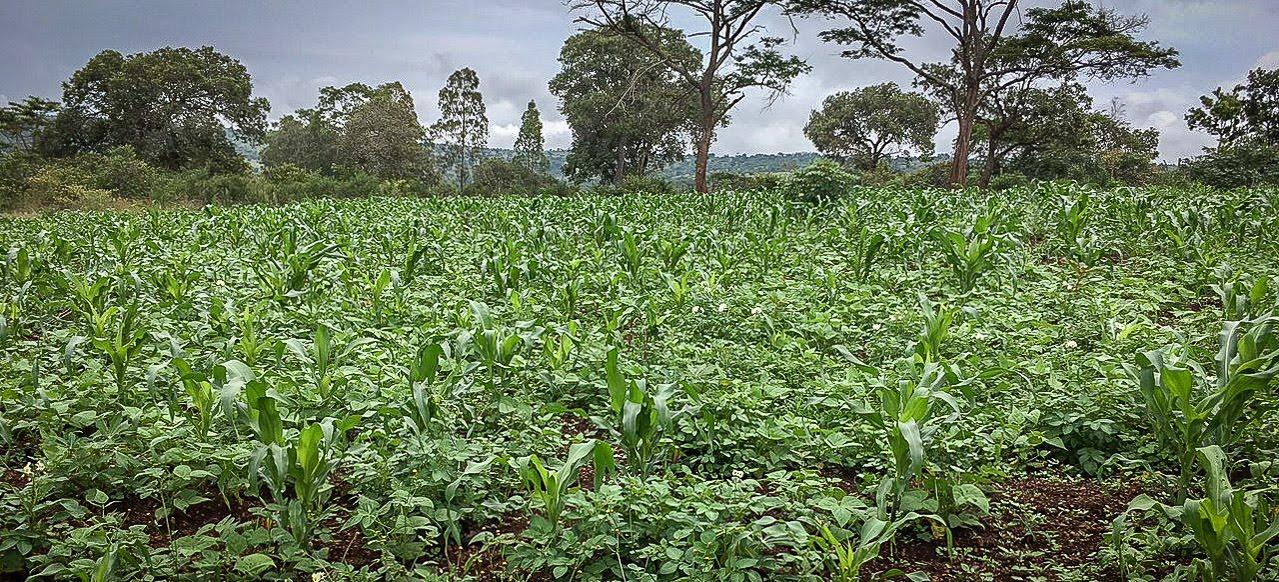 corn and beans.jpg