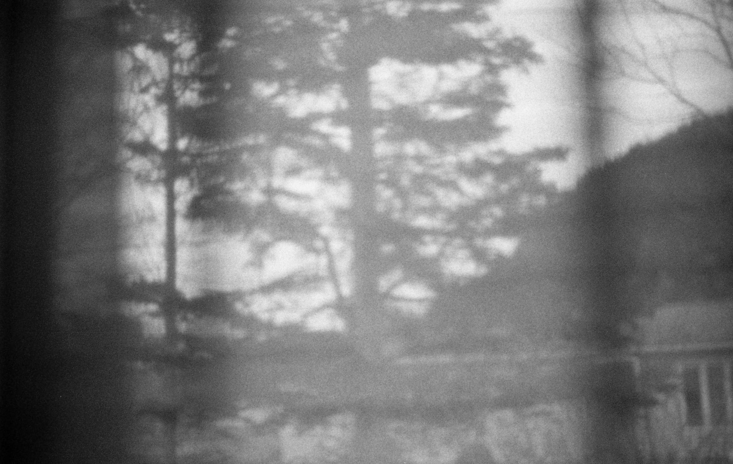 Memory fragment. The view from my old bedroom. That tree seems like it came out of nowhere.