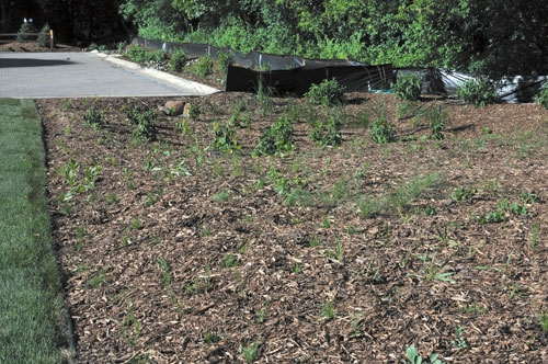 Carol Matheys Center for Children and Families has a new rain garden through a grant from the Washington County Conservation District. A rain garden, overflow gardens, and permeable pavers complete the project. (Linda Baumeister/Review)