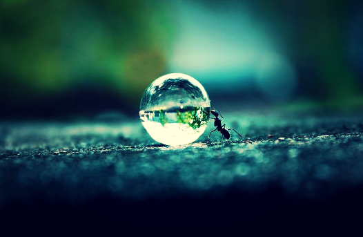 An Ant Making Hard Work Look Good. photo credit*: a freaking genius with a sweet camera (*seeking photo credit)