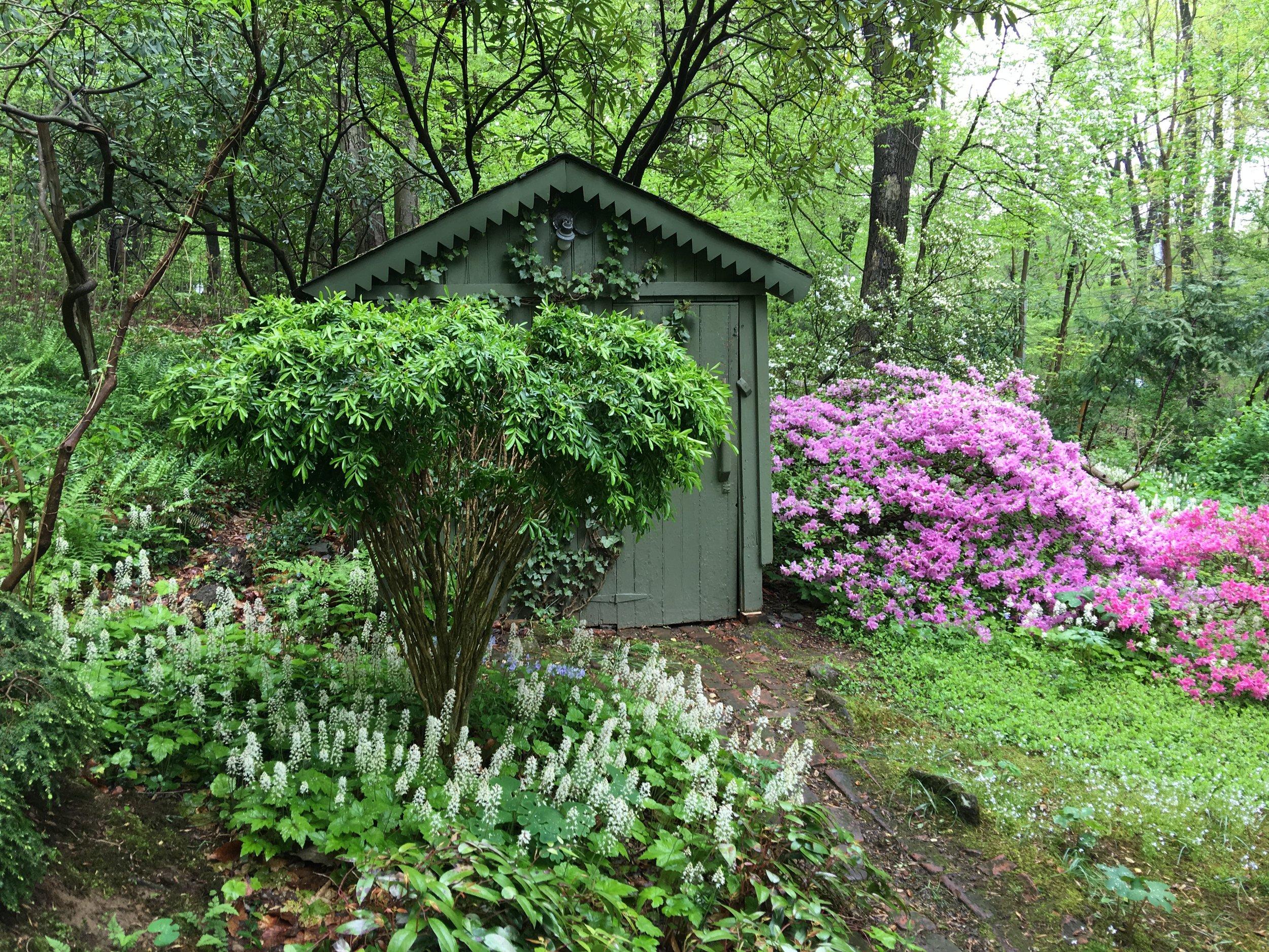 Dave Benner's shade garden in spring.
