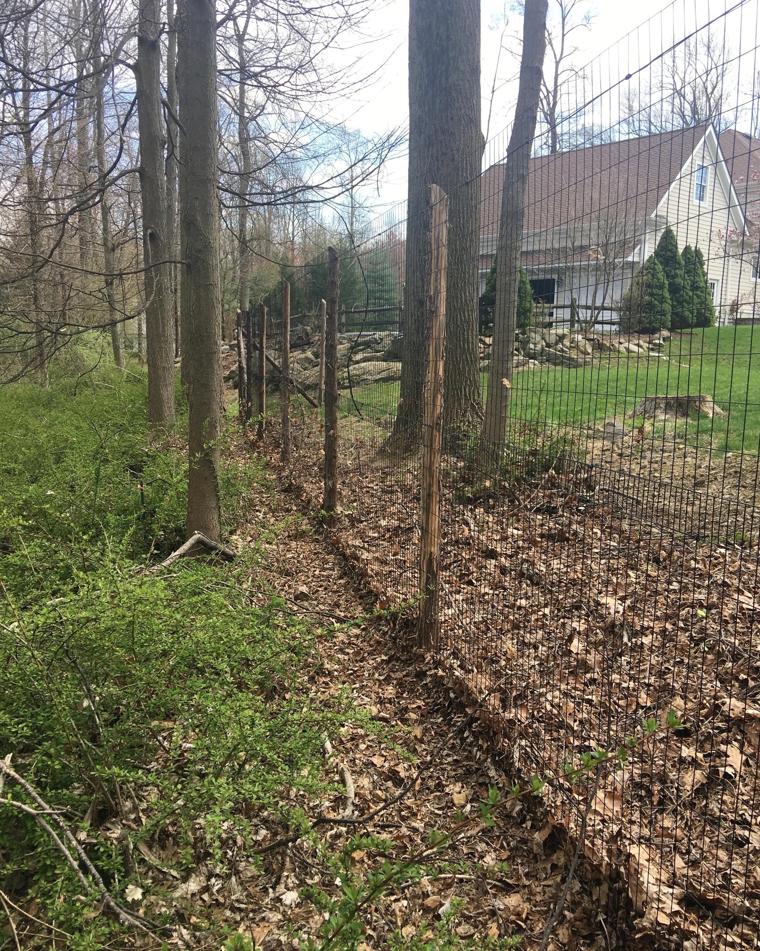 metal deer fence