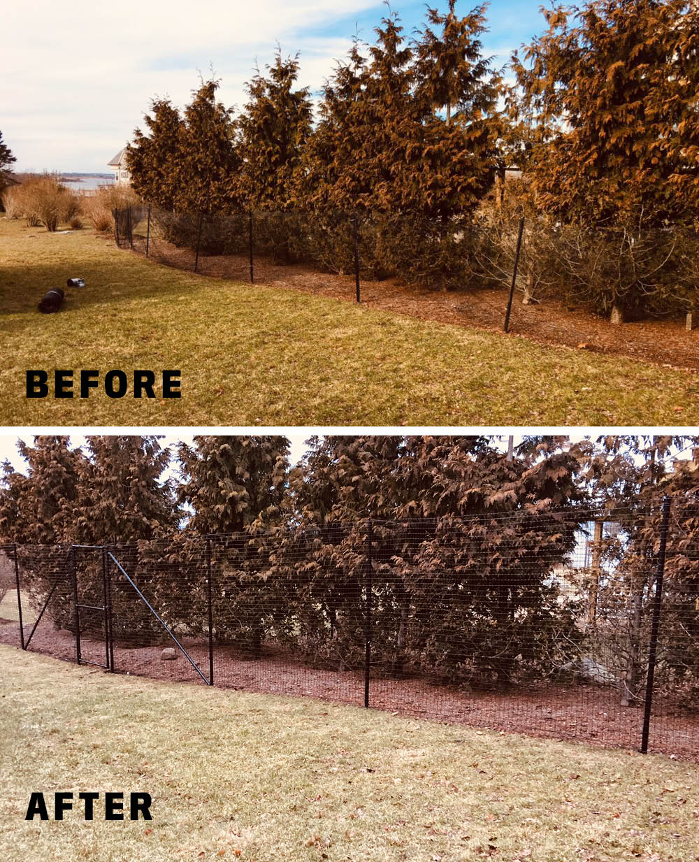 Deer Fence before and after.jpg