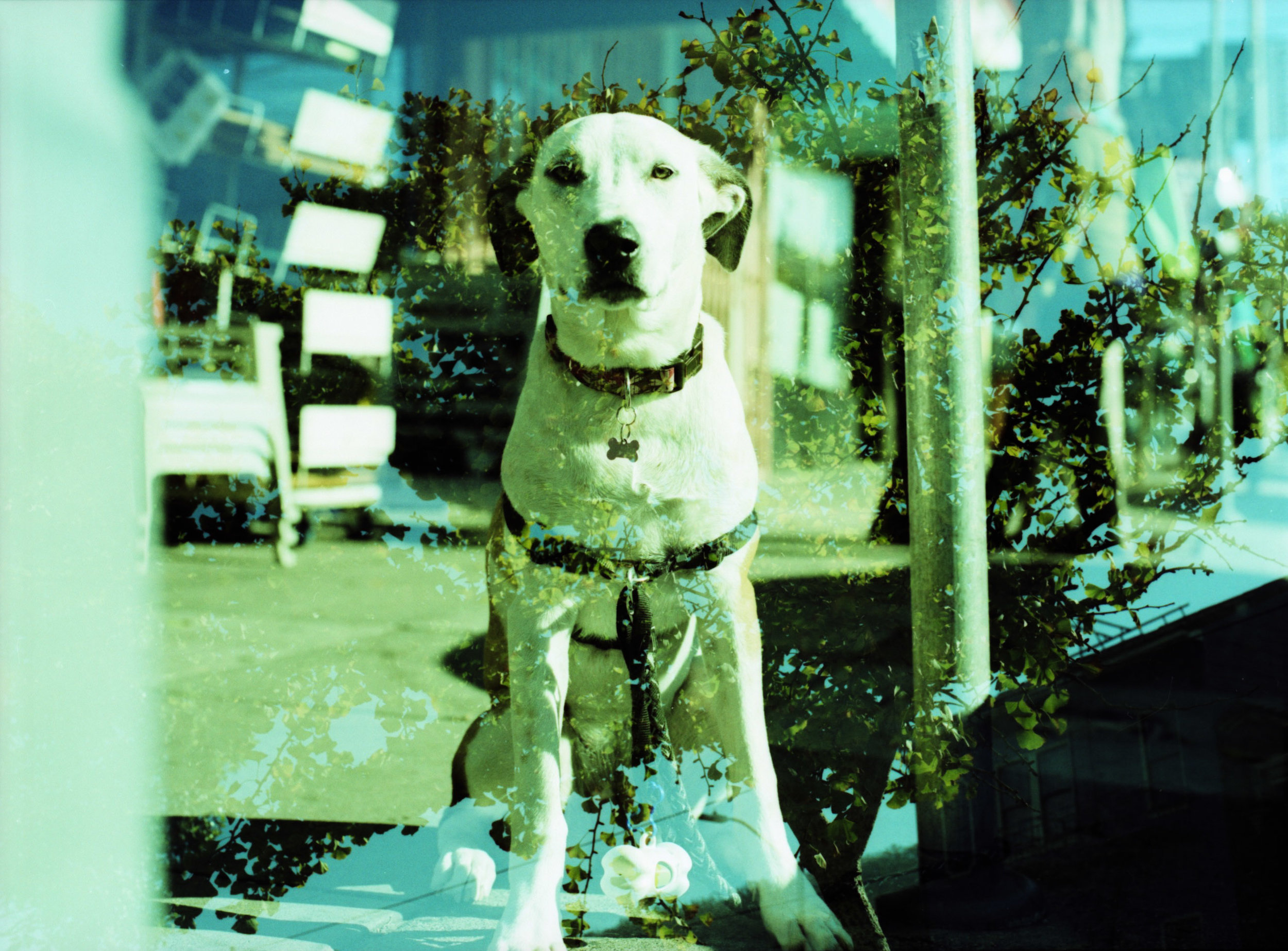 Mamiya - Provia 100F x-pro - Dog on street.jpg